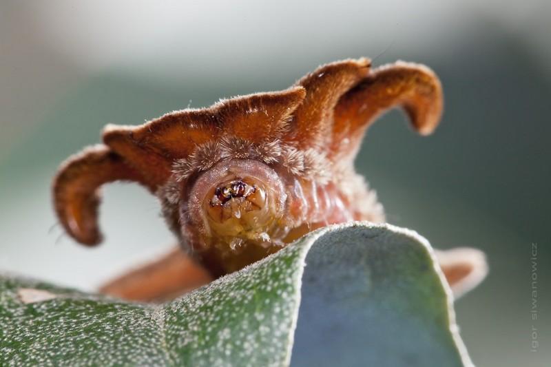 Макрофотографии крохотных существ от Игоря Сивановича (25фото)