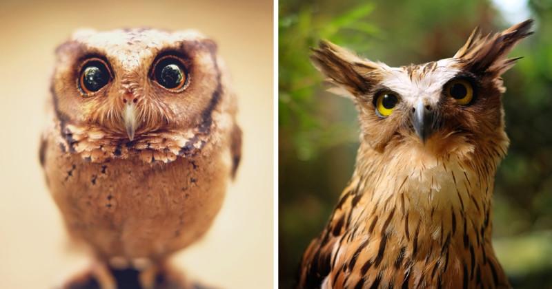 19 гипнотически красивых сов, пойманных в объектив фотографа (20фото)