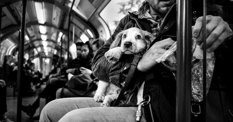 Фотограф снимает портреты собак со всего мира (37фото)