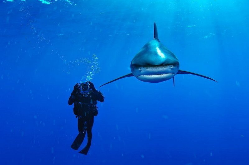 Подводный мир на снимках Брайана Скерри (22фото)