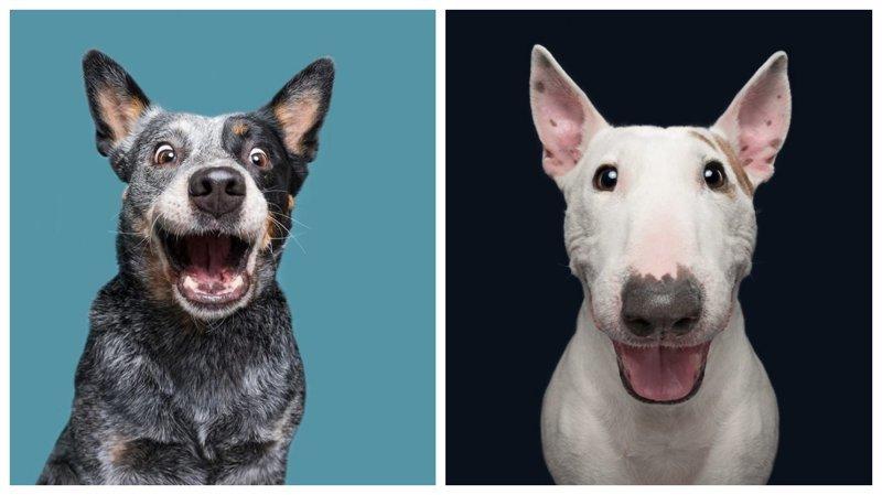 Собачий характер: замечательные портреты собак от Эльке Фогельзанг (22фото)