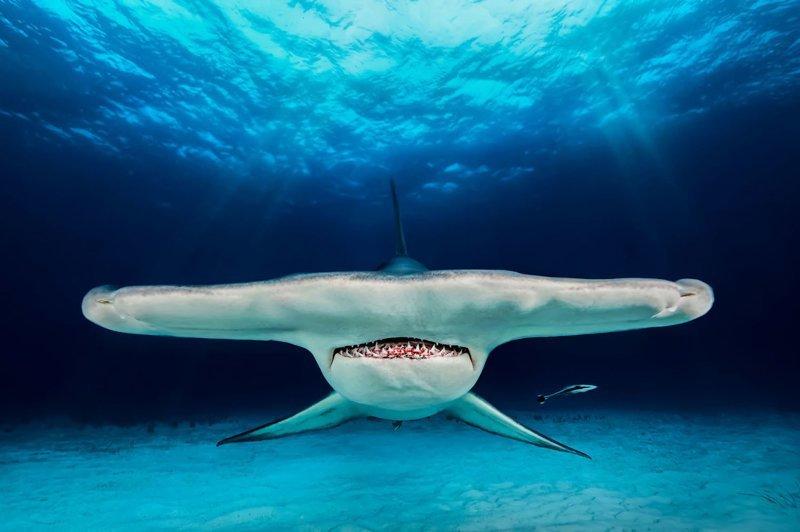 Невероятные снимки победителей конкурса подводной фотографии (27фото)