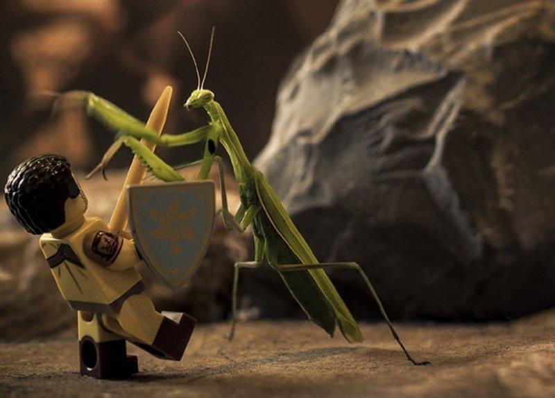 Фотограф снимает сценки с фигурками LEGO и насекомыми (17фото+1видео)