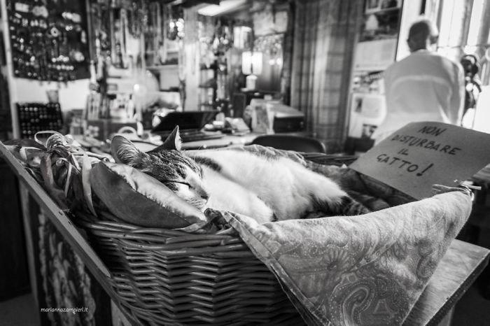Фотопроект C-AT Work: кошки на работе (16фото)