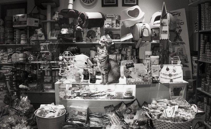 Великолепные кошки в объективе Марианны Зампиери (34фото)