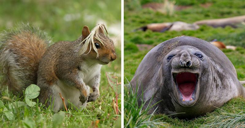 20 смешных фотографий животных с конкурса Comedy Wildlife Photo Awards 2018 (23фото)