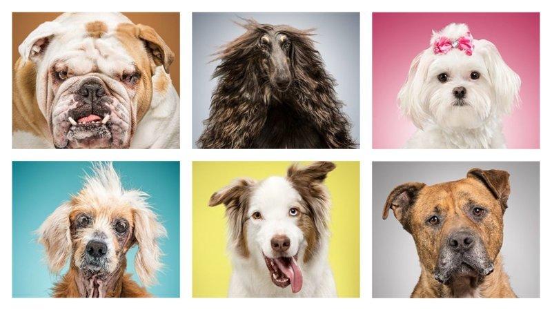 Фотопроект: 6 собак и 6 наборов предметов, описывающих их жизнь (7фото)