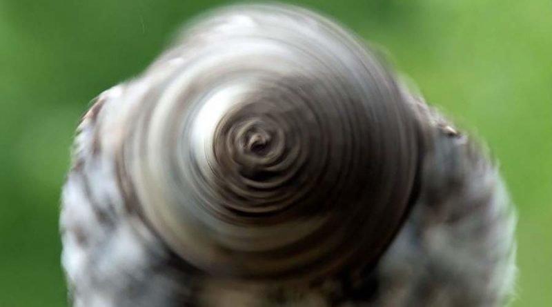 Фотографу удалось запечатлеть вращающуюся голову совы, которая отдалённо напоминает колесо (2фото)