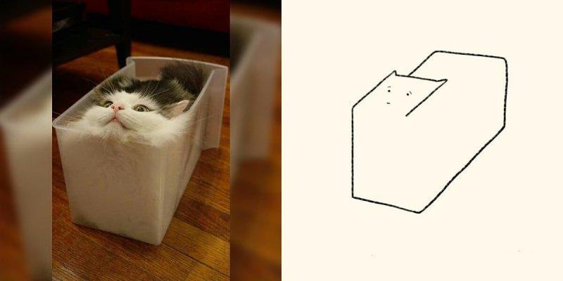 Когда все думают, что ты рисуешь какую-то хрень, а на самом деле реалистичных котов (21фото)