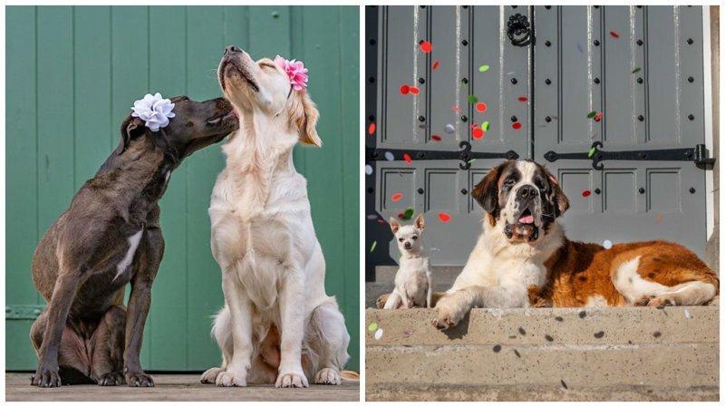 11 фотографий о любви, наполненных глубоким смыслом (12фото)