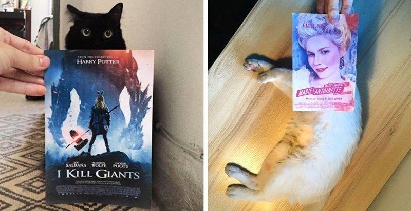 Фотограф гоняется за котами, чтобы сделать их героями кинокартин (20фото)