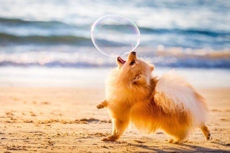 Самые фотогеничные собаки престижного конкурса английского кинологического клуба (21фото)