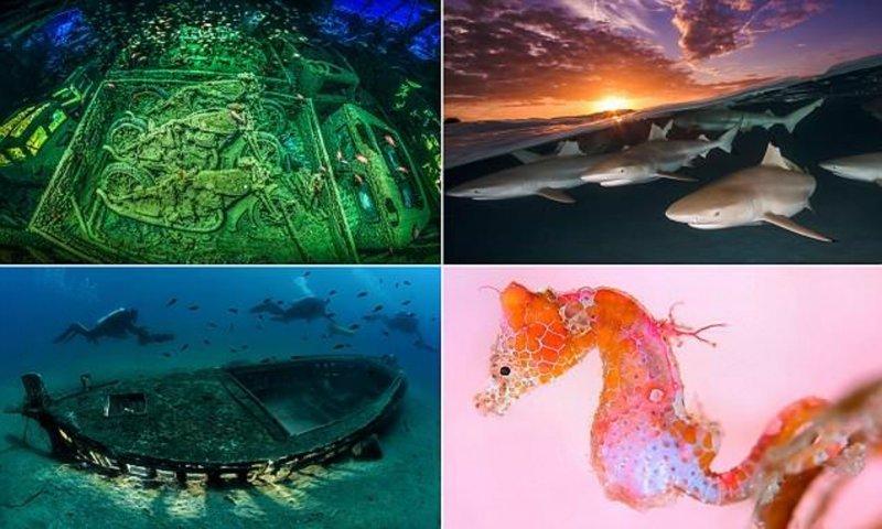 Лучшие подводные снимки с конкурса Underwater Photographer of the Year 2018 (20фото)