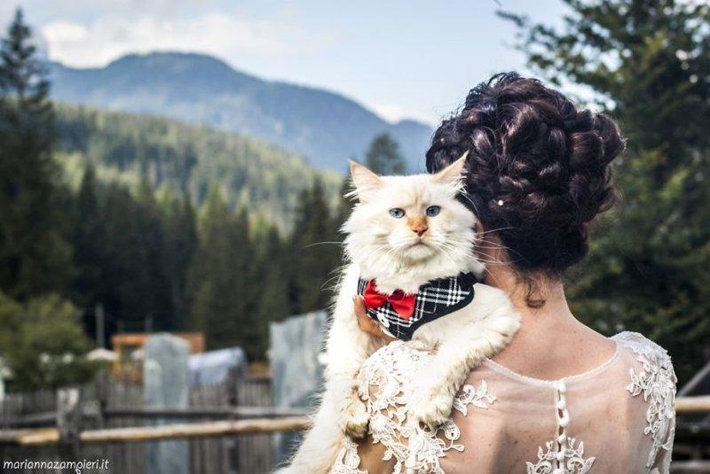 Фотограф снимает невест с их кошками и результат не может быть более очаровательным (20фото)