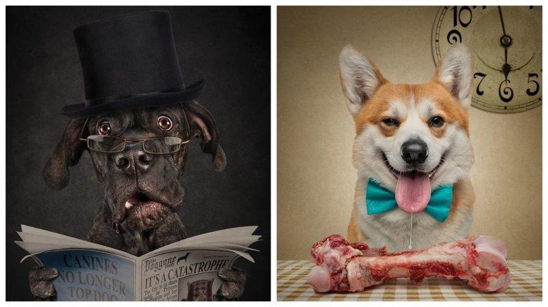 Фотопортреты собак и кошек, на которых они чертовски похожи на людей (14фото)