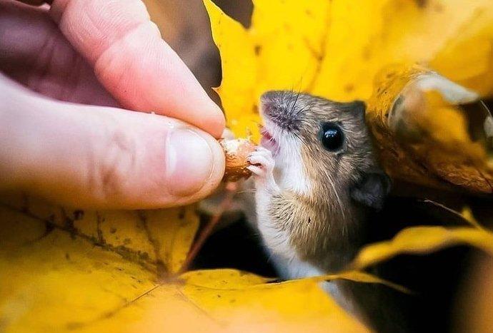Дикая природа Финляндии: симпатичные портреты животных Осси Сааринена (29фото)