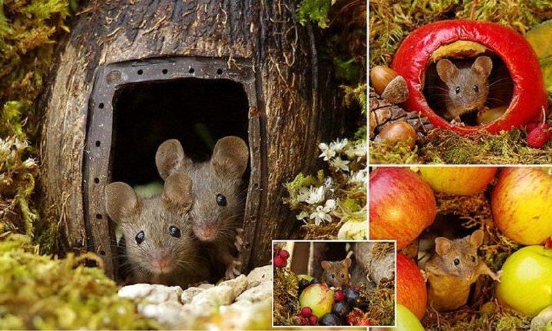 Фотограф построил для садовых мышей игровой городок (6фото)