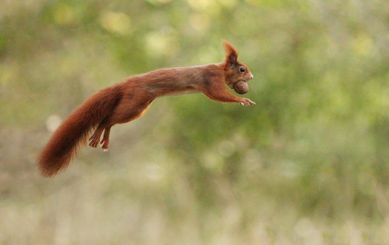 Замечательные фотографии животных от Юлиана Рада (24фото)