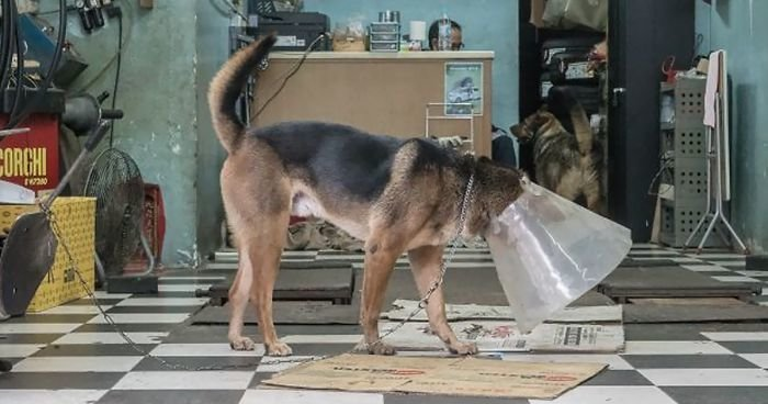 Собаки - обитатели автомастерских Гонконга (23фото)