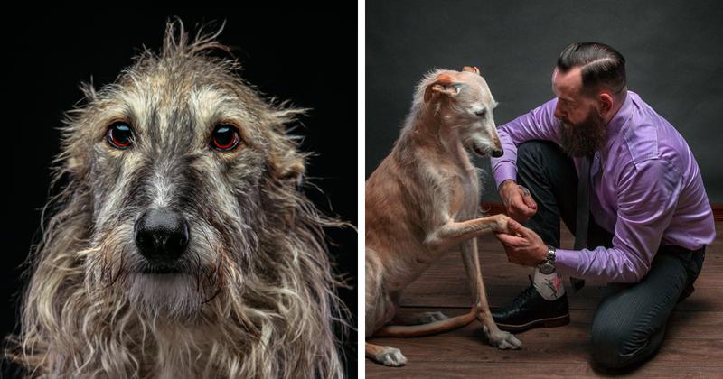 Фотографии собак, брошенных испанцами после окончания сезона охоты (25фото)