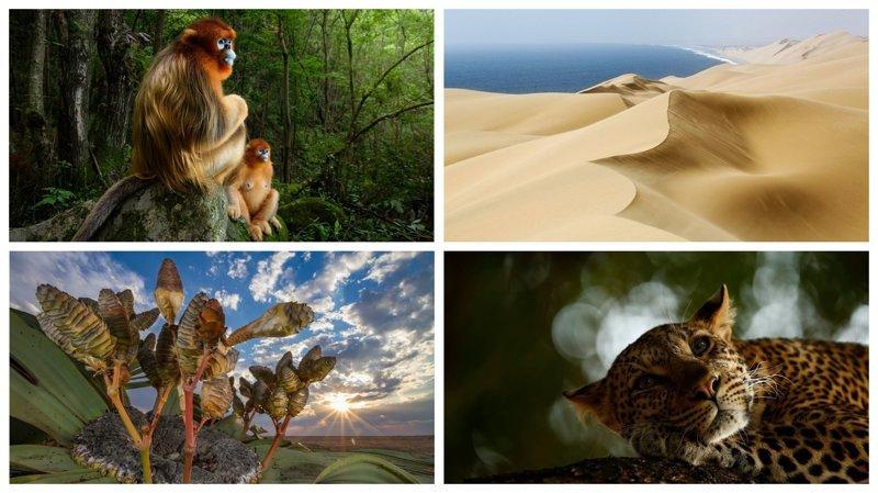 Победители конкурса Wildlife Photographer of the Year 2018 (20фото)