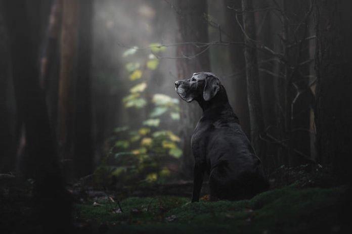 Лучшие фото собак 2018 года (40фото)