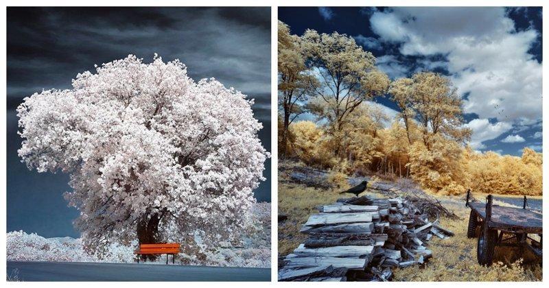 Инфракрасные фотографии, на которых привычные вещи предстают в непривычном виде (23фото)