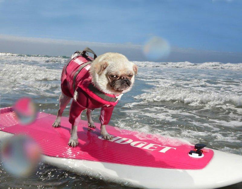 Легкий способ убежать от печалей - вслед за собакой! (21фото)