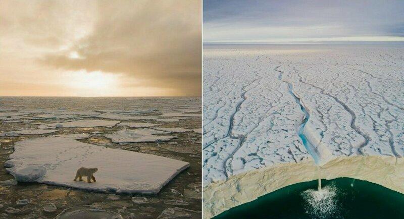 Завораживающая красота: норвежский фотограф раскрывает тайны мира дикой природы (26фото)