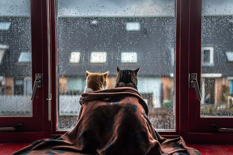 Кошки у окошка (8фото)