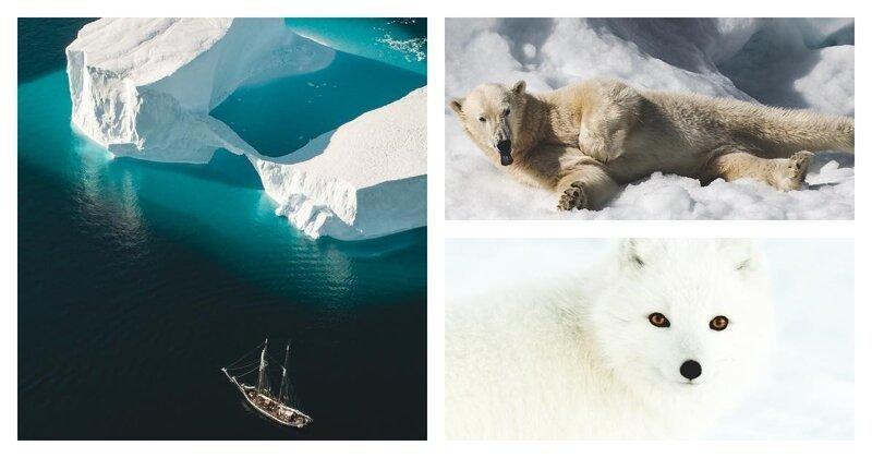 Шикарные фотографии из арктической экспедиции Джо Шаттера (20фото)