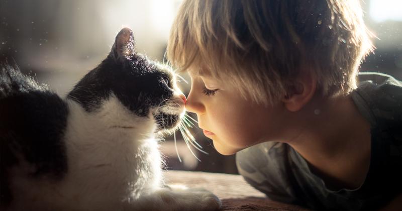 Очаровательные фотографии дружбы мальчика с кошками (20фото)