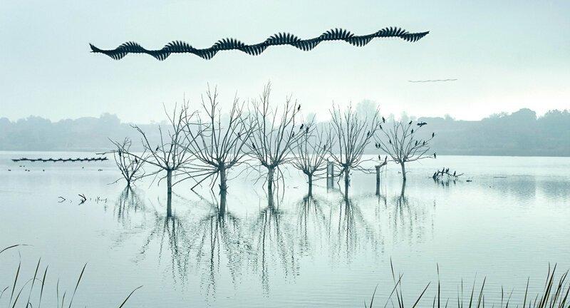 Траектории полетов птиц: сделать невидимое видимым (19фото)