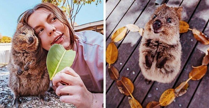 15 снимков жизнерадостных квокк от фотографа из Москвы, которая лишь ради них прилетела в Австралию (16фото)