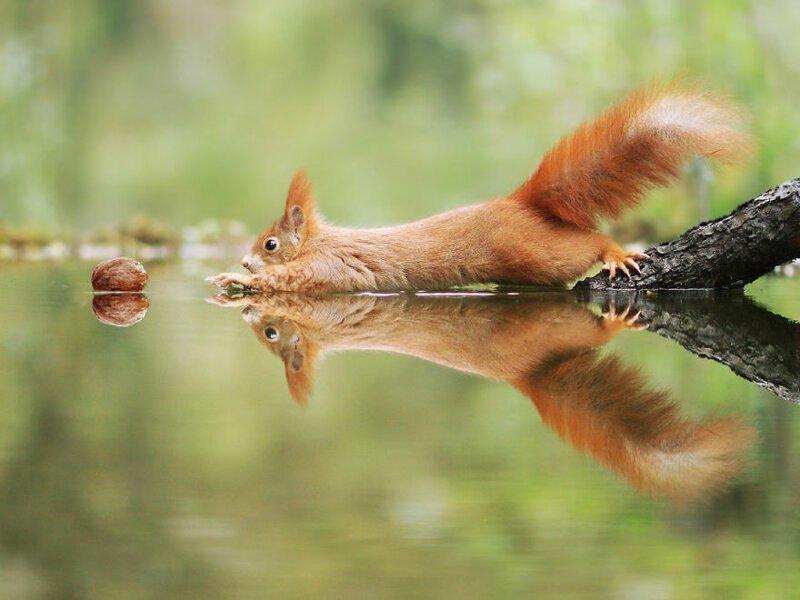 Австрийский фотограф делает крутые снимки милых диких животных (57фото)