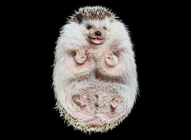 «Взгляд снизу»: чудные фотографии животных в проекте Андриуса Бурбы (33фото)