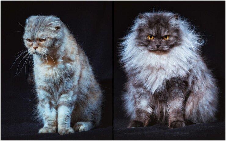 Бездомные уральские коты стали фотомоделями, чтобы найти новых хозяев (16фото)