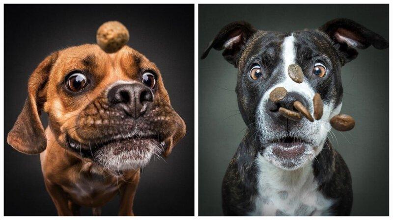 Уморительные морды собак, которые пытаются поймать угощение на лету (31фото)