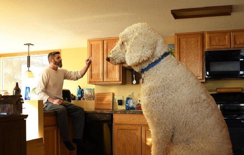 Хорошей собаки должно быть много! (40фото)