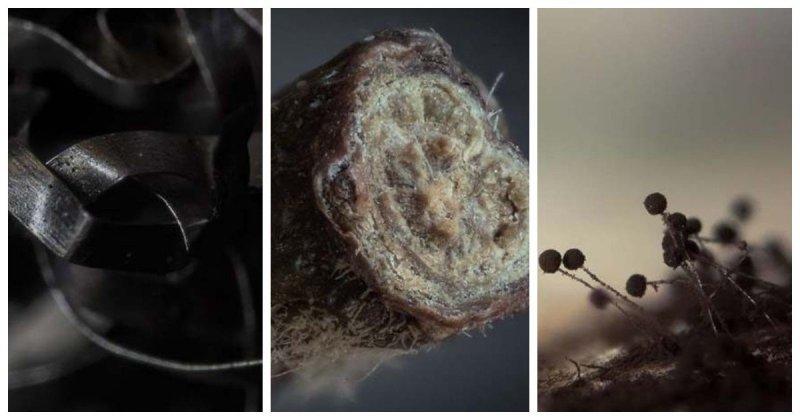 28 сногсшибательных макрофотографий повседневных предметов, сделанных фотографом-самоучкой (29фото)