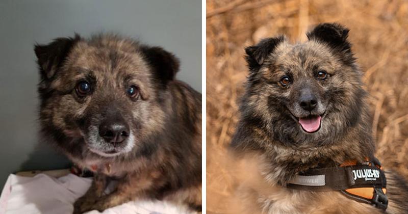 Фотограф устраивает съемки для собак из приюта, чтобы помочь им обрести хозяев (20фото)