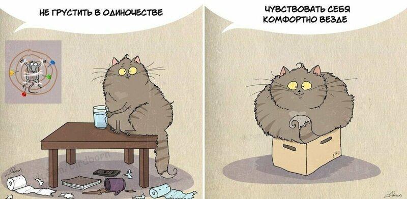 10 полезных вещей, которым людям стоит поучиться у котов (12фото)