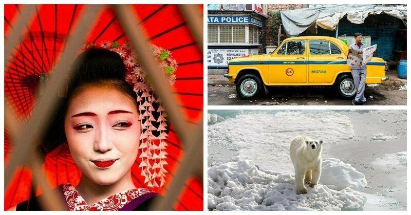 От Африки до арктической тундры России: финалисты фотоконкурса National Geographic Traveller 2019 (37фото)