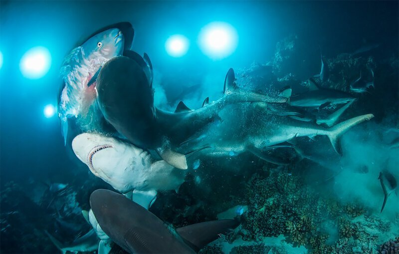 Подводный мир: победители конкурса Underwater Photographer of the Year 2019 (27фото)