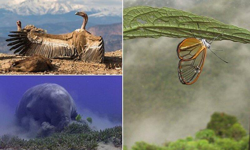 Прозрачная бабочка победила в фотоконкурсе (14фото)