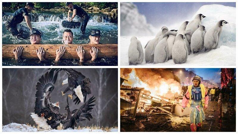 Финалисты Открытого конкурса Sony World Photography Awards 2019 (22фото)