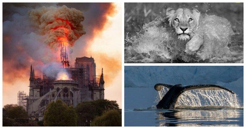 Запоминающиеся работы конкурсантов National Geographic Travel 2019 (11фото)