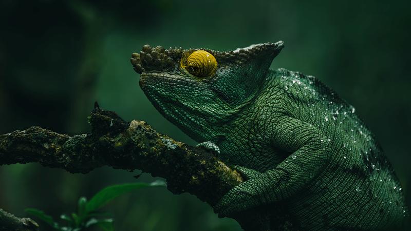 Потрясающие фотографии животных Мадагаскара (15фото)