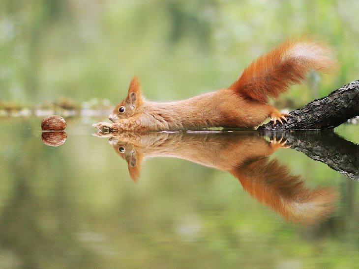 Позитив из дикой природы (22фото)