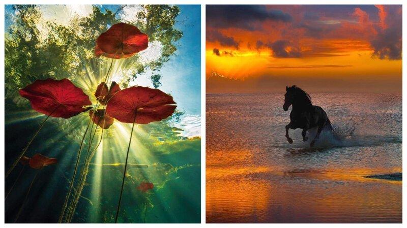 Ода природе: великолепные снимки Пепе Сохо (36фото)